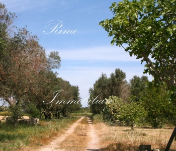 V452, Terreno Agricolo