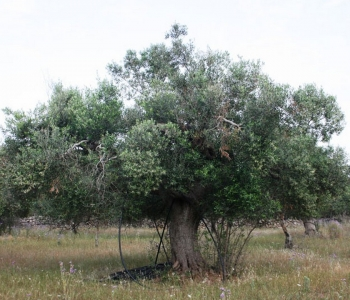 V375, Terreno Agricolo