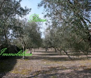V493, Terreni Agricoli Salento